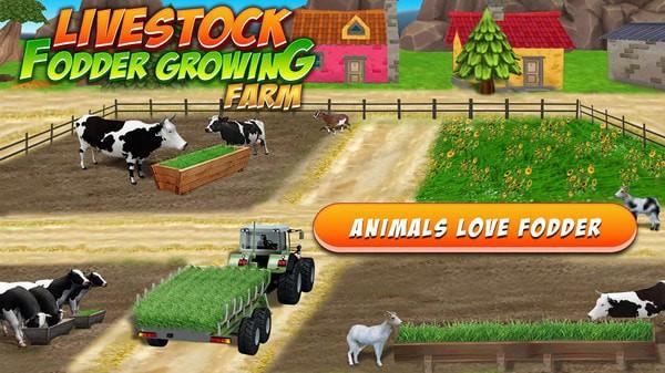 养殖和饲养牛